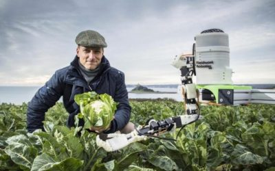 Agricultural robots about to replace human to harvest fruits